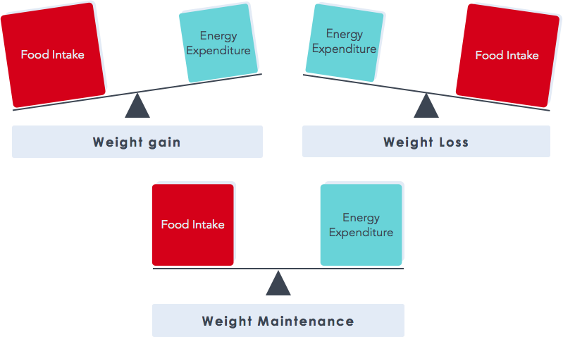 Fat Loss Diagram