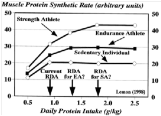 Muscle Protein Diagram